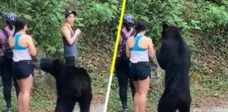 El oso de México - El oso de México
