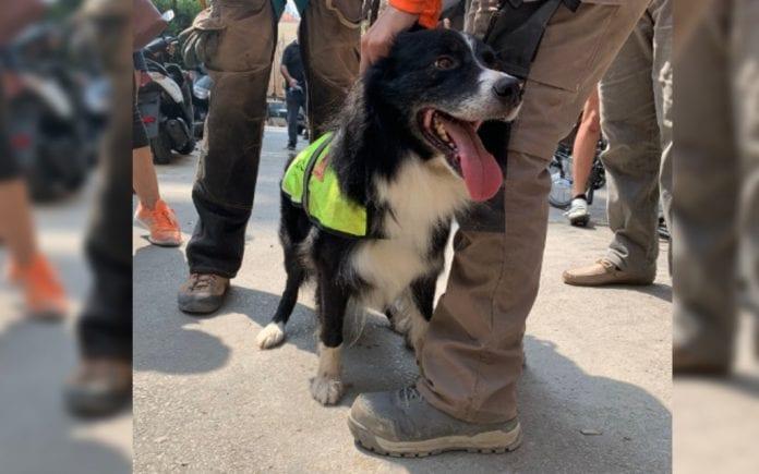 Flash el perro rescatista