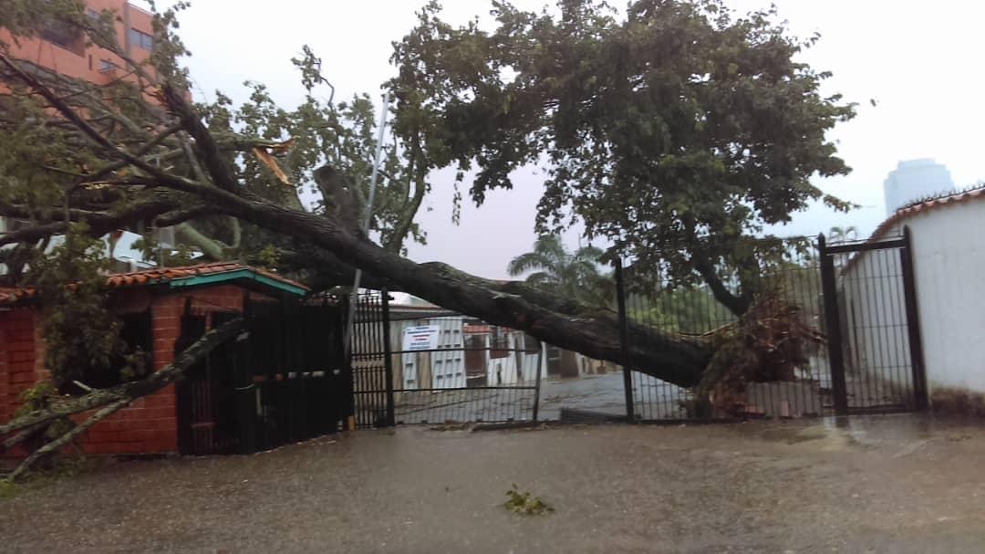 Luego de la caída de algunos árboles en Valencia la tarde de ayer, exigen a las autoridades el mantenimiento de estos. Las lluvias y vientos han dejado desde el año pasado varios troncos en el piso.