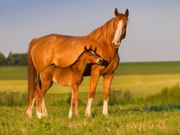 El caballo – el caballo