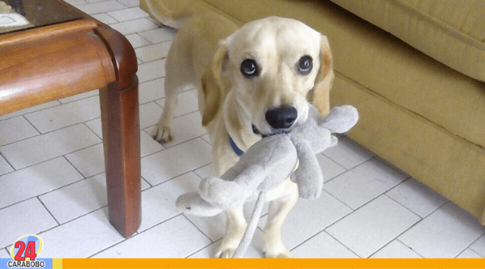 Salud del perro - Salud del perro