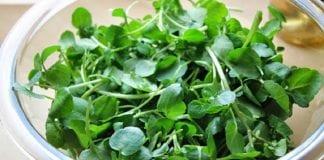 aportes ofrecen hortalizas organismo - aportes ofrecen hortalizas organismo