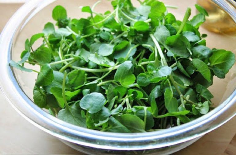 Conoce qué aportes ofrecen algunas hortalizas a nuestro organismo