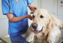 tratamiento cáncer en mascotas