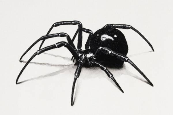 La Viuda Negra – La Viuda Negra