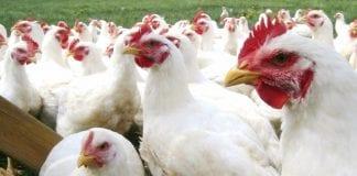 Alemania gripe aviar países bajos