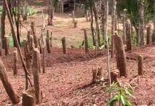 Tala de árboles en Venezuela - Tala de árboles en Venezuela