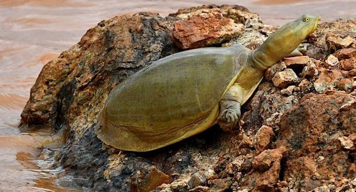 peculiar tortuga - peculiar tortuga