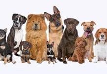 nombre del perro - nombre del perro