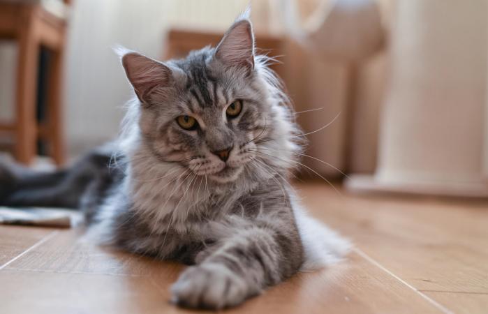 El gato - El gato