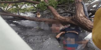 Dos personas murieron tras caerle un árbol