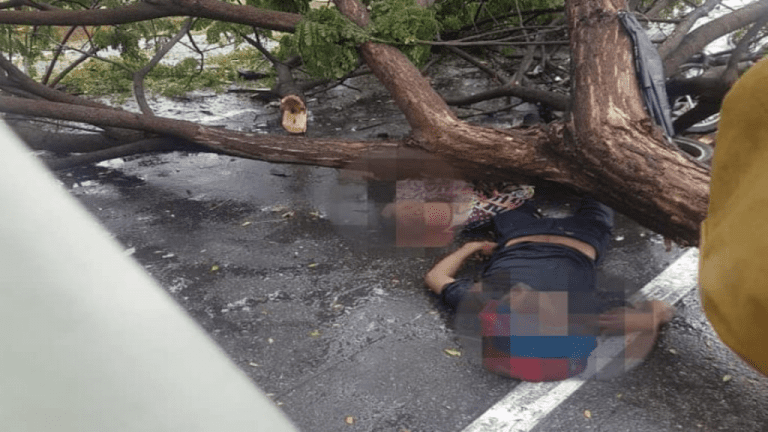 Dos personas murieron tras caerle un árbol en Puerto Cabello