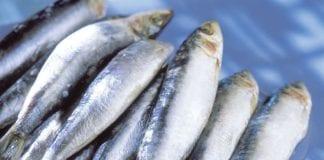 Beneficios de la sardina - Beneficios de la sardina