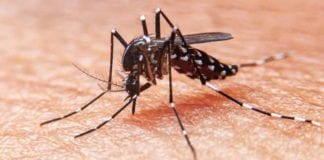 Casos de dengue - Casos de dengue