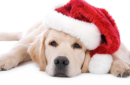 Salvaron la Navidad - Salvaron la Navidad