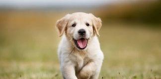 La enseñanza del perro - La enseñanza del perro