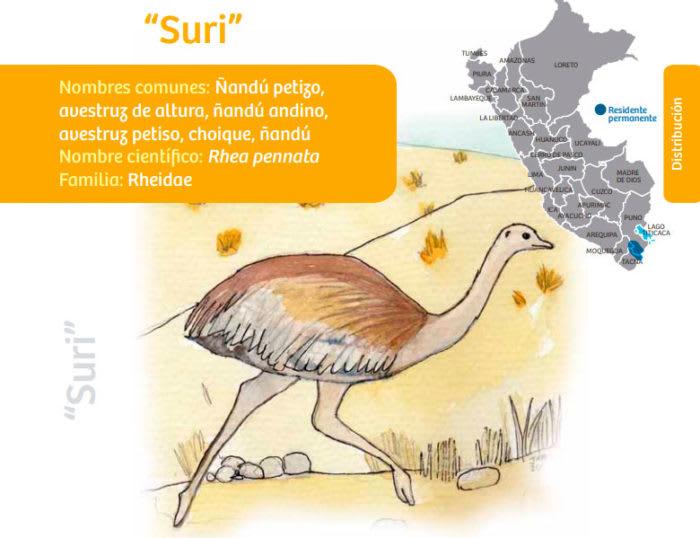 Suri - Suri