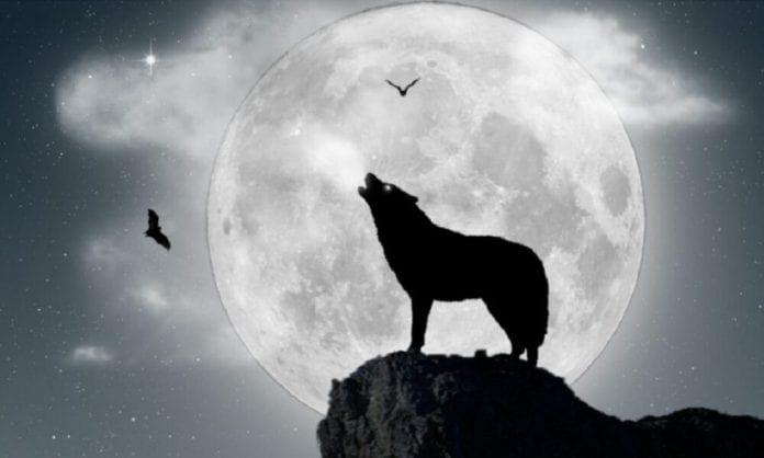 """""""Luna de Lobo"""" - """"Luna de Lobo"""""""