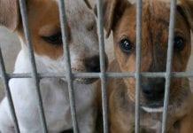 Cómo denunciar el maltrato animal