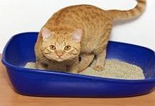 El cajón de arena del gato - El cajón de arena del gato