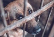 """""""El Coconazo"""" detenido por maltrato animal - """"El Coconazo"""" detenido por maltrato animal"""