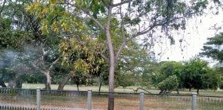 Parque Metropolitano de Maracay - Parque Metropolitano de Maracay