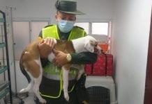 Hombre detenido atacar machetazos perro - Hombre detenido atacar machetazos perro