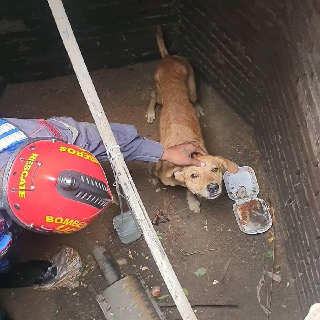 Perro rescatado en Naguanagua