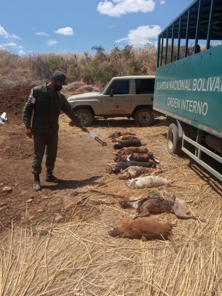 envenenamiento de animales