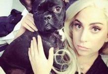 Perros de Lady Gaga - Perros de Lady Gaga