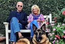 Las mascotas de Joe Biden - Las mascotas de Joe Biden