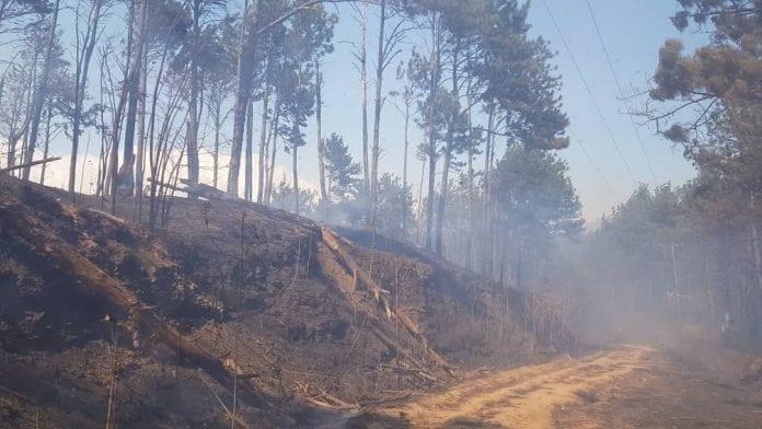 Incendios forestales en Carabobo - Incendios forestales en Carabobo