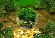 Día Mundial de la Naturaleza - Día Mundial de la Naturaleza