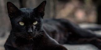 Gatos envenenados - Gatos envenenados