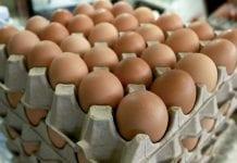 Precio de huevos y queso - Precio de huevos y queso