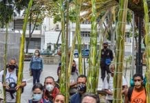 Se realizó el descenso de losPalmeros de Chacao palma real