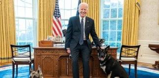 Perros de Joe Biden - Perros de Joe Biden
