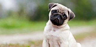 reto viral de TikTok que involucra a perros - reto viral de TikTok que involucra a perros