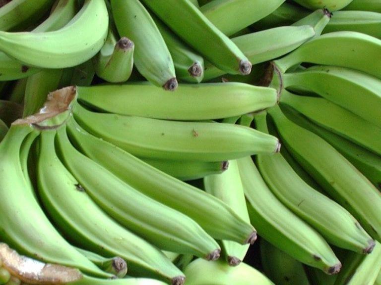 ¡Saludable! Los beneficios del plátano verde, mejor que el maduro