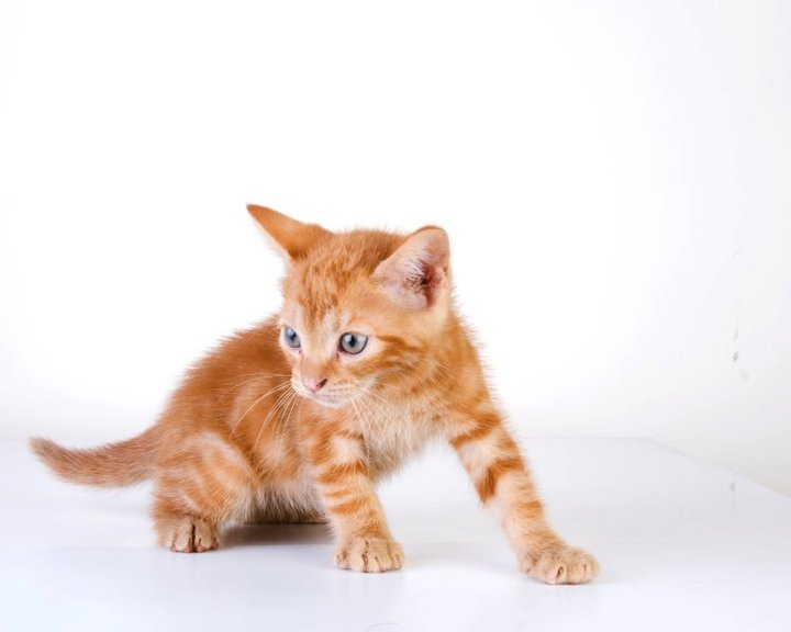 gato bebé - gato bebé