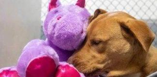 Perro callejero trató de robarse un unicornio - Perro callejero trató de robarse un unicornio
