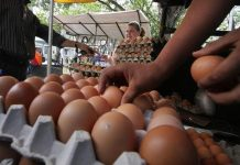 Precio de queso y huevos - Precio de queso y huevos