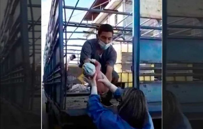 Mujer dio a luz en camión para transportar ganado - Mujer dio a luz en camión para transportar ganado