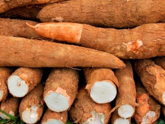 Beneficios de la yuca - Beneficios de la yuca