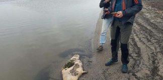 170 focas aparecieron muertas en el Mar Caspio