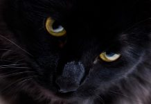 La venganza del gato - La venganza del gato