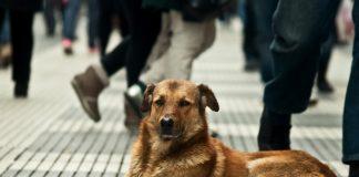 Rescate de perros - Rescate de perros