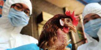 primer caso de gripe aviar H10N3 - primer caso de gripe aviar H10N3