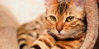 Gato boxeador conquista con su hazaña - Gato boxeador conquista con su hazaña