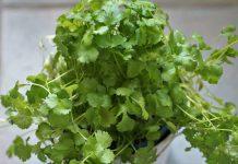 Hortalizas y vegetales verdes - Hortalizas y vegetales verdes